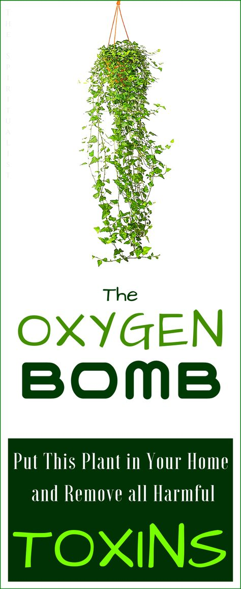 Protect Yourself: Put This Oxygen BOMB in Your Home and Remove All Harmful Toxins