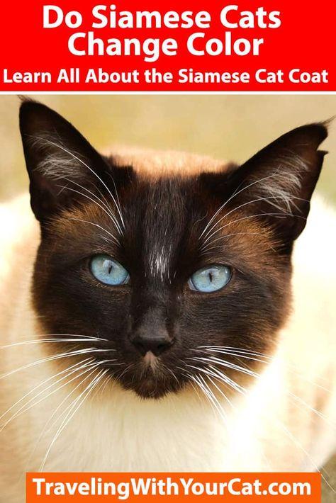 63 Cats Breeds Ideas In 2021 Cats Cat Breeds Breeds
