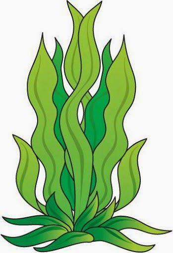 Maestra De Infantil Plantas Y Flores Para Colorear Igual Que Un Modelo Dibujos Para Plastificar Paginas Para Colorear De Animales Mar Animado Fondo De Mar