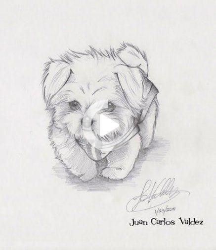 30 Ideas Dogs Drawing Maltese Easy Animal Drawings Cute Dog Drawing Dog Drawing