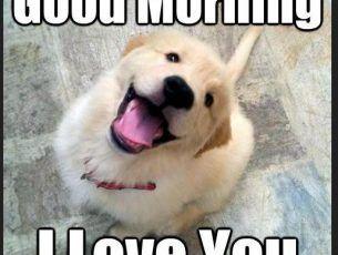 Dog Good Morning Memes Download Morning Memes Good Morning Dog Dogs