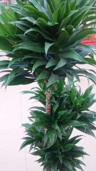 15++ Plantas con hojas gruesas inspirations