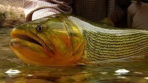 Photo of fliegenfischen frauen