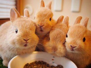 佐野 小山 足利 鹿沼の観光スポットランキングtop10 じゃらんnet 子ウサギ かわいいウサギ かわいい動物の赤ちゃん
