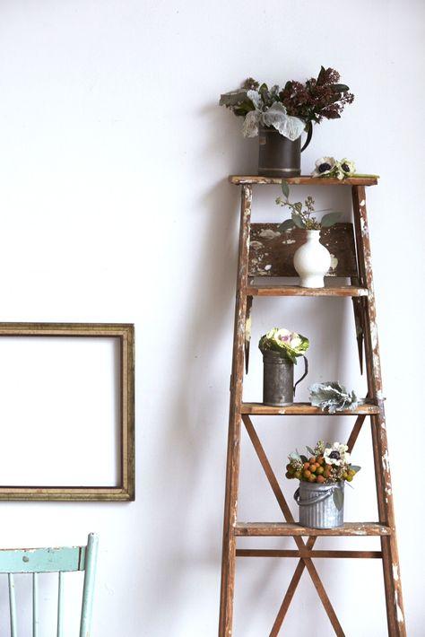 plants on a ladder #splendidspaces