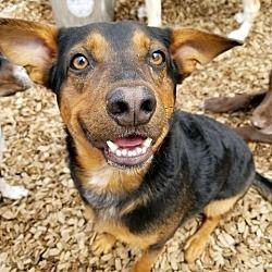 Barrington Ri Hound Unknown Type Meet Buddy G A Dog For Adoption Pets Dog Adoption Kitten Adoption