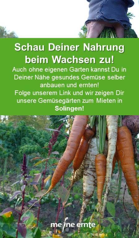 Schau Deiner Nahrung Beim Wachsen Zu Garten Selbstversorger Garten Gesundes Gemuse