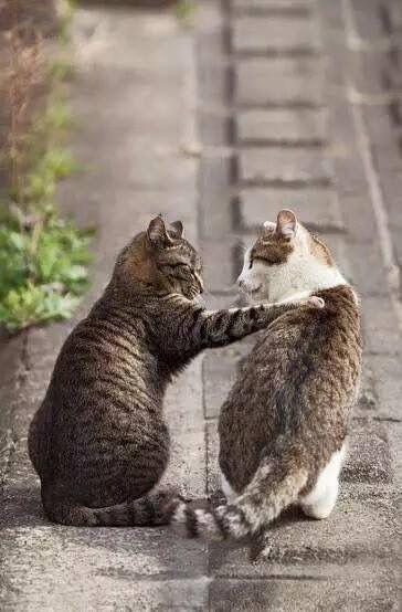 Pin De Gabriela Genovese En Meow Gato Leopardo Gatos Animales