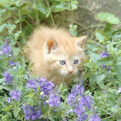 Pesticides That Kill Pests But Not Pets Garden Ideas Cat Safe Plants Cats Und Houseplants Safe For Cats