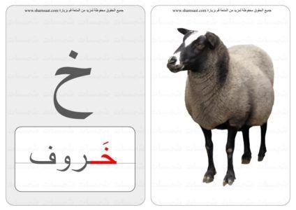 حرف كلمة صورة بطاقات الحروف والحيوانات 7
