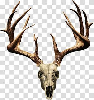 32+ Deer antler clipart png ideas in 2021