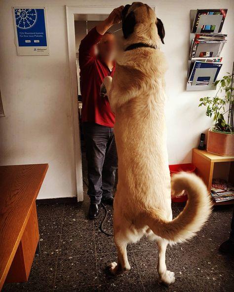 Der Kleine Karl Ist Seit Der Letzten Nk Richtig Gewachsen Notpfoten Tierschutz Hunde Tiere Und Pfoten