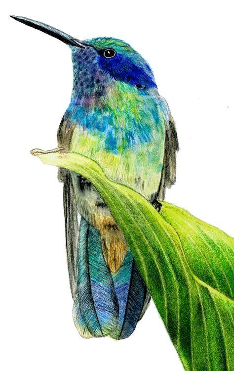 Tubes Gifs Oiseaux Avec Images Oiseau En Aquarelle Animaux