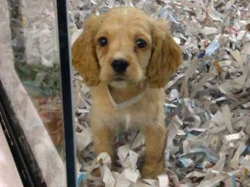 If Your Hands Are Ever Zip Tied Together Here S The Easy Way To Escape In Seconds Goodfullness Pet Store Puppies Pet Store Rescue Puppies