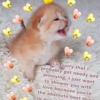 Pin By Cloud Sky On Meme Cute Love Memes Cute Memes Love You Meme