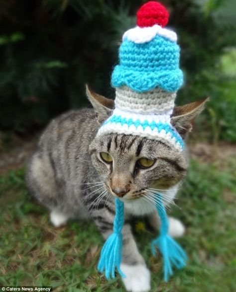Photo of Artist creates colourful collection of hats for cats that you just can't help but smile at