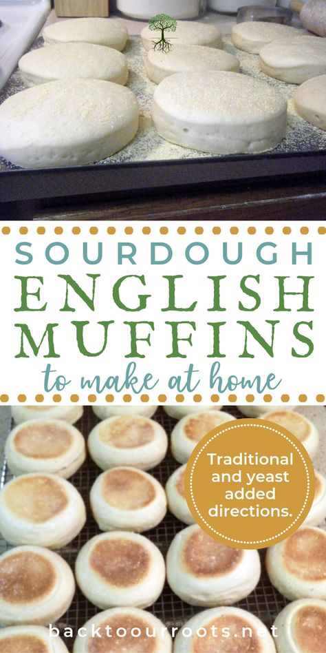 English Muffins are a permanent part of breakfast around here. You can eat them simple with just cream cheese, or fancy as Eggs Benedict. But either way, sourdough is the way to go! Come join me as I walk you through the process.