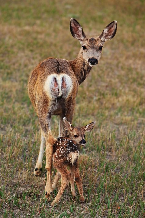 Le mother and child the animals, cute baby animals, nature animals, wild animals Baby Animals Pictures, Cute Baby Animals, Funny Animals, Mother And Baby Animals, Animal Puns, Cute Animal Pictures, Animal Quotes, Nature Animals, Animals And Pets