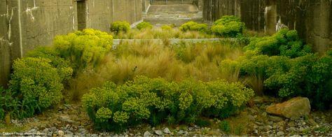 Coloco Paysagistes Urbanistes Jardiniers Jardins Du Tiers Paysage Paysagiste Jardin Paysager Paysage