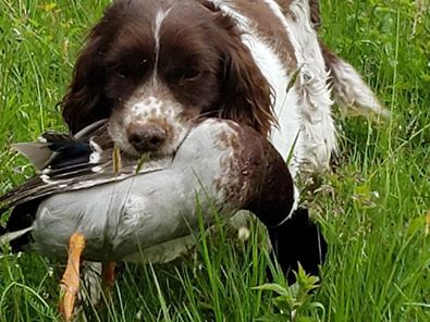 Upland Chat Group Page 4 Bird Dog Forums Bird Dog Chat