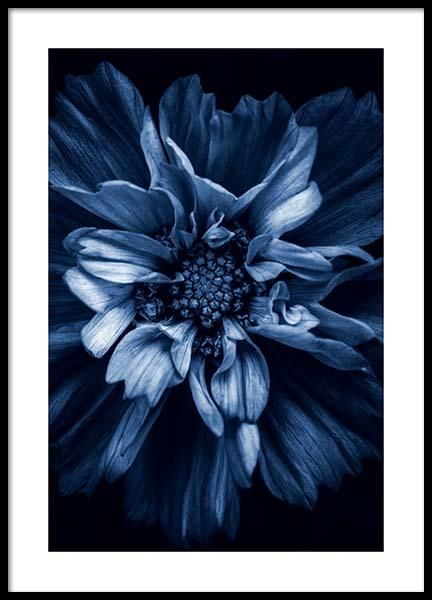 Photo Art And Modern Photo Prints At Desenio Buy Your Photo Art Online In 2020 Online Wall Art Poster Prints Botanical Poster