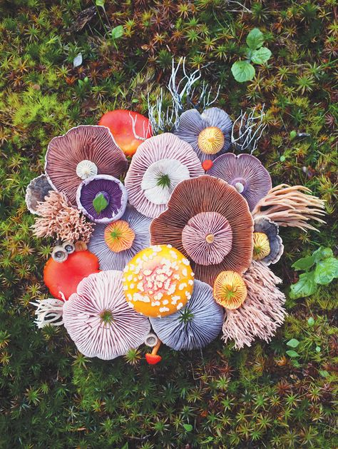 jill bliss forages flora to form magical mushroom medleys - - on daily wanderings across the islands of the pacific northwest, artist jill bliss finds some strange and surreal species of plants and animals. Mushroom Art, Mushroom Fungi, Mushroom Species, Wild Mushrooms, Stuffed Mushrooms, Posca Art, Slime Mould, Plant Fungus, Botany