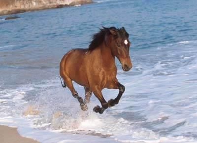 Horses & horse back riding