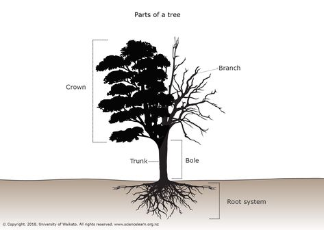parts of a tree dendrochronology tree diagram, tree tree diagram drawing tree diagram