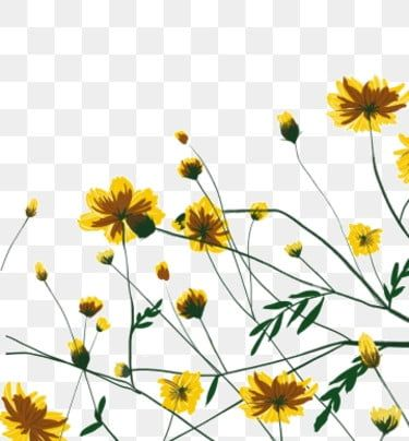Hand Drawn Cartoon Daisy Flowers Border Decoration Free Buckle Element Yellow Flowers Flat Small Fresh Png Transparent Clipart Image And Psd File For Free Do Colorful Backgrounds Watercolor Flowers Hand Drawn