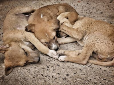 Justice For Puppies Reportedly Left To Die In Freezing Cold In 2020 Newborn Puppies Puppies Justice