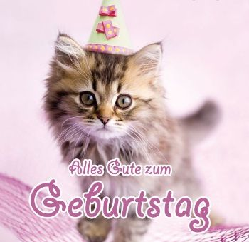 Katze Hund Bilder Und Spruche Fur Whatsapp Und Facebook Kostenlos