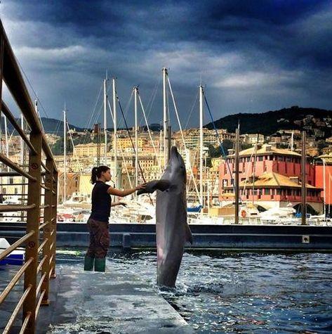 """#Genova secondo gli """"Igers"""". """"Abbraccio"""" di delfino all'Acquario"""