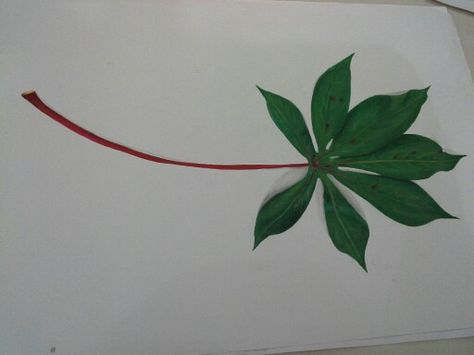 Daun Singkong Bunga Gambar Daun