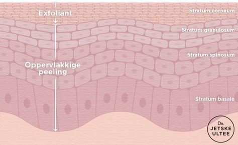 Dr. Jetske Ultee | Een dagelijkse exfoliant VS een oppervlakkige peeling. Hoe diep dringt een exfoliant met (max 2%) salicylzuur de huid in? En hoe diep dringt een chemische peeling met (max 30%) salicylzuur de huid in? #salicylic #acid #peeling #epidermis #huid #huidlagen #exfoliant #infographic