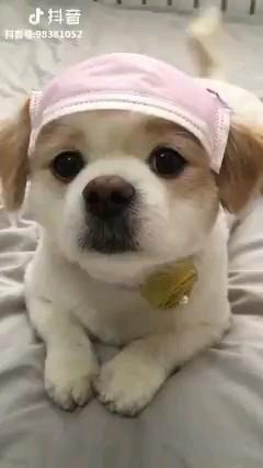 #dogsandpuppies #dogsofinstagram #puppiesofinstagram #puppylove #dogs #doglovers #puppy #puppylife #dog