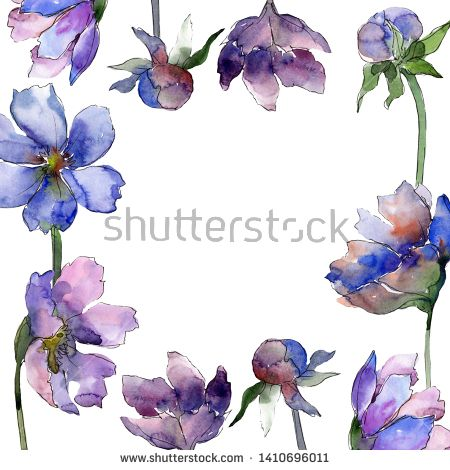 Stock Photo Violet Cosmos Flower Floral Botanical Flowers Wild Spring Leaf Wildflower Isolated Watercolor Backgro Botanical Flowers Floral Botanical Flowers