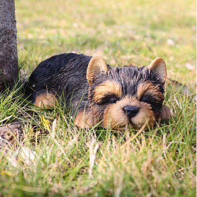 Sitting Sleepy Bulldog Puppy Statue Yorkshire Terrier Puppies