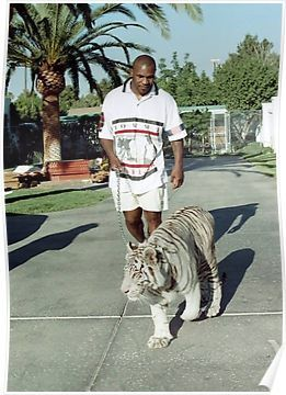 lolz online - Old school cool: Mike Tyson walking his tiger,
