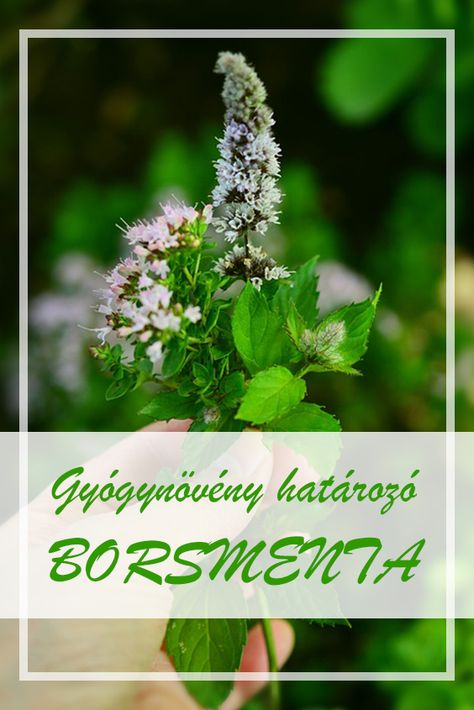 fogyás természetes gyógynövények felhasználásával)