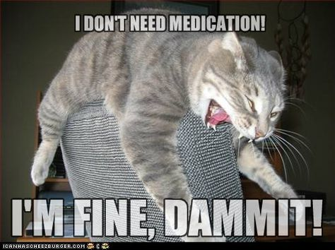 Funny Pictures, funny christmas pictures, funny animal pictures, funny cat pictures, funny dog pictures and random funny pictures. Funny Animal Memes, Funny Animals, Cute Animals, Funny Memes, Animal Funnies, Crazy Animals, Funny Horses, Memes Humor, Anxiety Cat