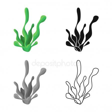 Vector Illustration Of Seaweed And Coral Icon Collection Of Seaweed And Marine Aff Seaweed Illustration Vecto Vector Illustration Vector Illustration
