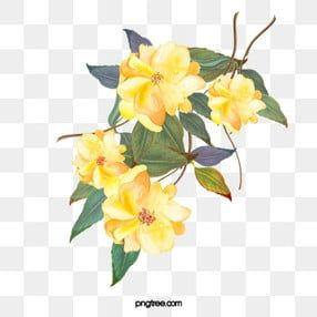 Yellow Flowers Yellow Flowers Green Leaves Png Transparent Clipart Image And Psd File For Free Download Flower Illustration Yellow Flowers Yellow Roses