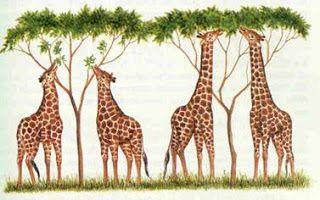 Actividades La Evolucion De Las Especies Evolucion De Las Especies Teoria De La Evolucion Teoria Evolutiva