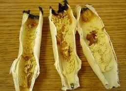The 25 best ear wax removal candle ideas on pinterest ear the 25 best ear wax removal candle ideas on pinterest ear candling near me diy ear candles and ear candling solutioingenieria Choice Image