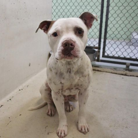 04 16 17 Odessa Tx Extremely Urgent Spot Is A Male