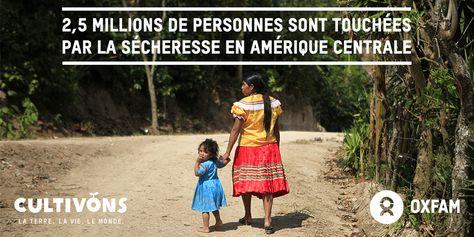 2,5 millions de personnes sont touchées par la sécheresse en Amérique centrale. Il est plus que temps d'agir face au changement climatique et à ses conséquences. www.oxfam.org/fr/cultivons