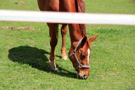 Free Image on Pixabay - Horse, Mammal, Animal, Nature