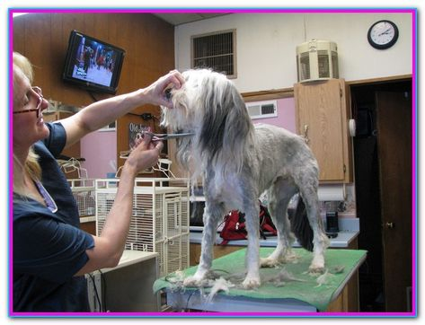 Certified Online Dog Grooming School The Online Pet Grooming Courses Penn Foster Offers Prepares Students With The Ski Dog Grooming Dog Groomers Pet Groomers