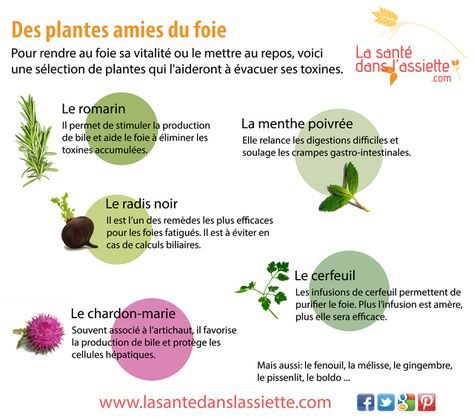 Des plantes amies du foie