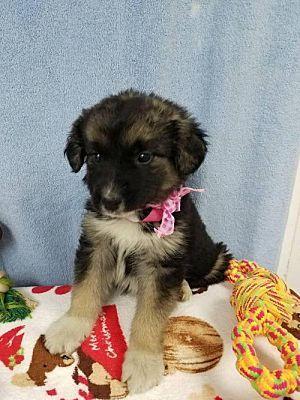 Danbury Ct Great Pyrenees Meet Melina A Dog For Adoption Kitten Adoption Pets Dog Adoption